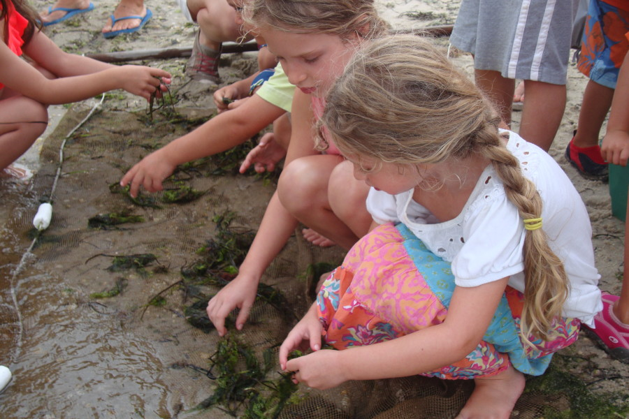two young girls searching reaching the hands into the sand while studying ecology